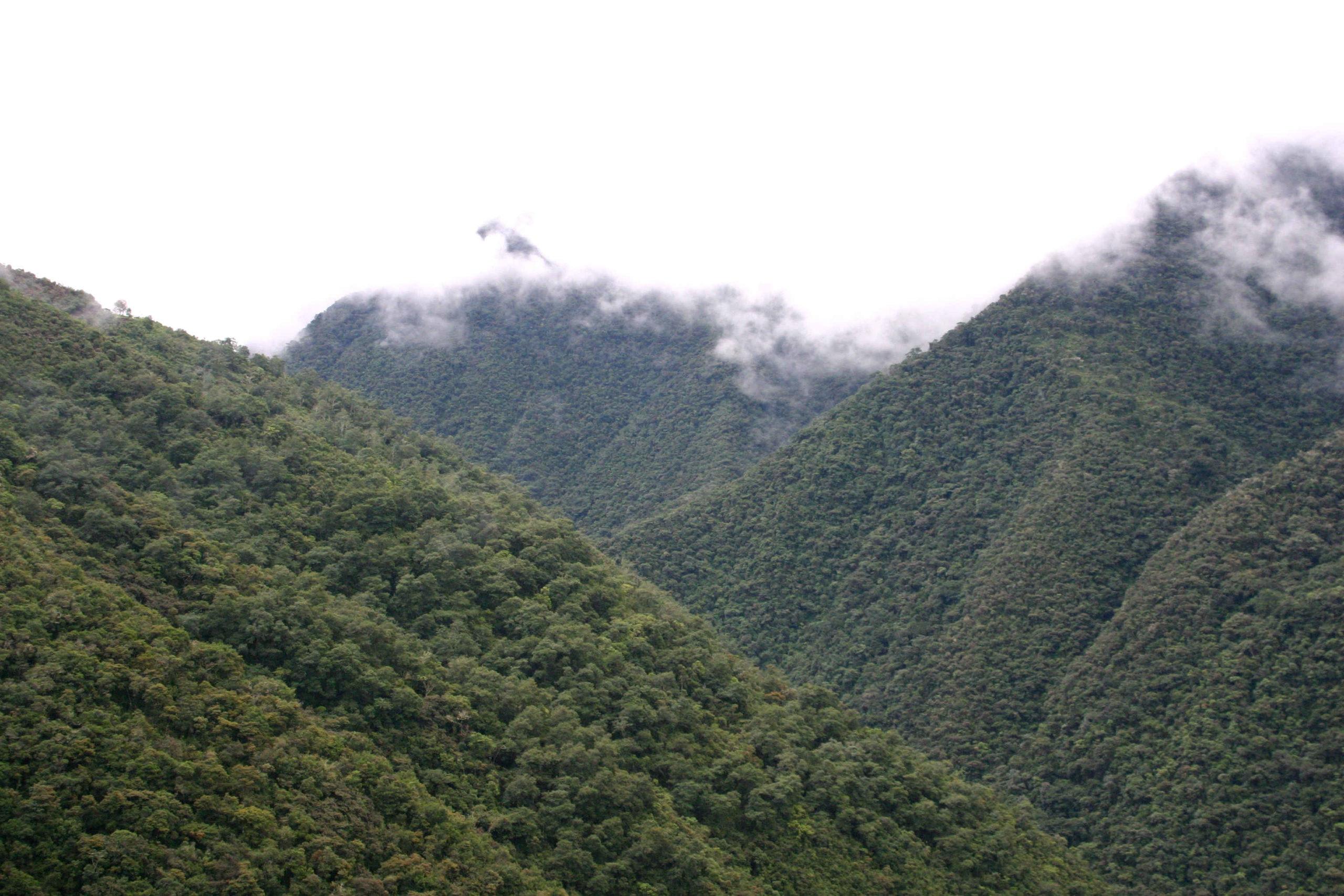 Rain forest in Bolivia - photo by Felix Schaumann
